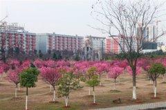 汉口学院 校园环境(5)