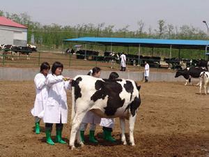 华中农业大学自考畜牧兽医专科(510301)专业介绍及课程设置